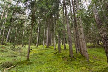 Wood in Seiser Alm