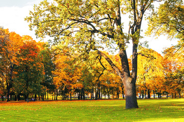 Autumn picturesque landscape in vintage tones- sunny autumn landscape park lit by sunshine-autumn park in sunshine