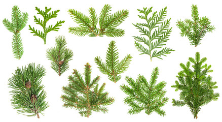 Set coniferous tree branches. Spruce, pine, thuja, fir twigs Wall mural