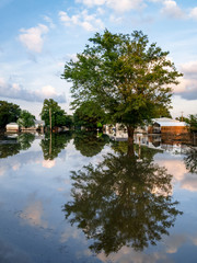 Neighborhood Tree Reflected in Flood Waters