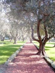 Akko Bahai gardens red patch 2003