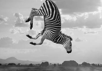 Hakuna-Matata-Zebras – Composite