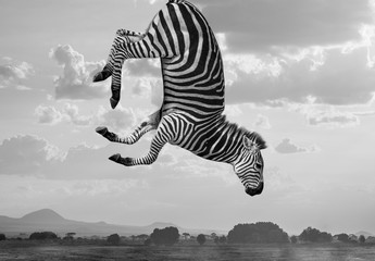 Composite de zèbres Hakuna Matata