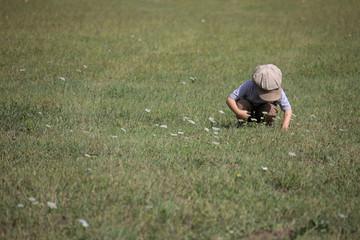jack in field