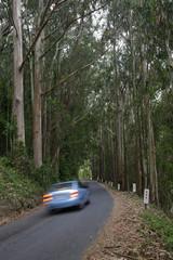 car tail lights in eucalyptus