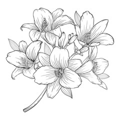 beautiful monochrome black and white bouquet lily isolated on background.