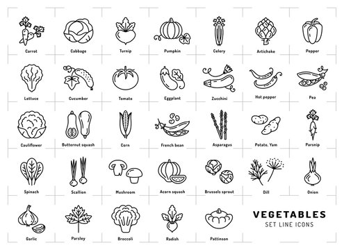 Vegetables icon isolated, Spices logo. Trendy thin line art style. Fresh vegetarian food, vegetable garden: tomato, salad, carrot, pepper, pumpkin, pea, onion, dill, parsley and etc. Vector
