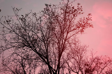 beautiful dry tree branches silhouette at sunset , color filter effect background