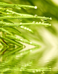 image of fir branches above the water close-up