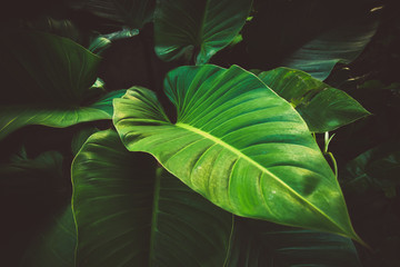 Tropical leaves background vintage color