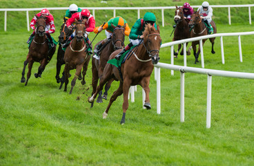 Horse race taking the turn on the track at speed