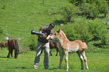Photographer showing the picture on camera to a little foal in green mountain enviroment