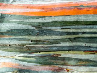 colorful of skin wood earth tone horizontal line