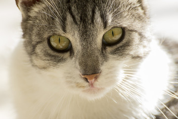 Cat looking straight at you