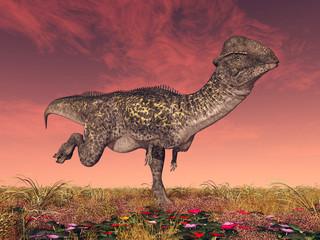 Dinosaurier Stegoceras