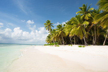 Saona Island in Punta Cana, Dominican Republic, Paradise on Earth