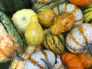 A variety of gourds in a supermarket in the fall