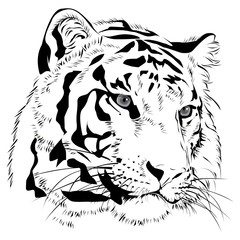Tiger head  hand draw monochrome on white background vector illustration.