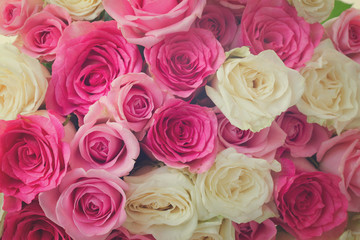background of pink and white fresh rose flowers close up, retro toned