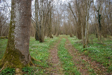 Trail at springtime in a deciduous forest