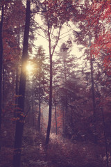 Beauty forest with sun rays in the morning