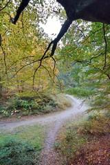 Sentier en forêt de Saint-Amand-les-Eaux
