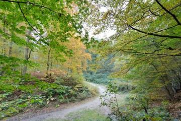Sentier en forêt de Saint-Amand-les-Eaux en automne