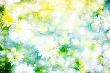 Colorful chrysanthemum flowers on a background of the autumn lan