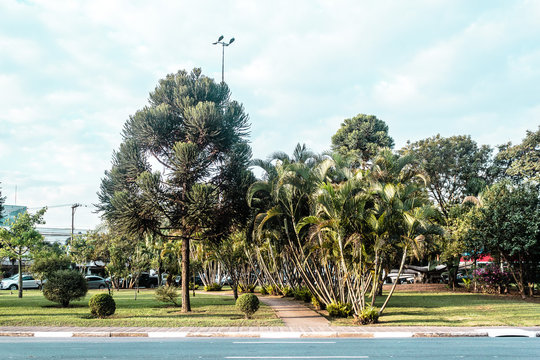 Brazilian Streets Full of Tropical Trees in San Paulo (Sao Paulo