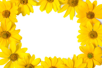 Frame with yellow flowers isolated on white background. Flowers closeup. Natural texture. Space for text. Summer card. Golden petals.