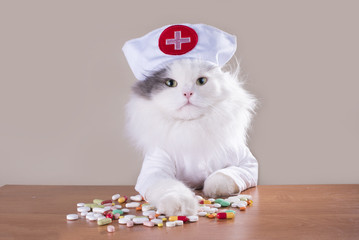 Cat in a suit of the doctor gives medicine