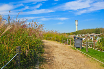 the silver grass & reeds in the field / A view of the silver grass & reeds in the field