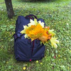 Рюкзак, листья и яблоки