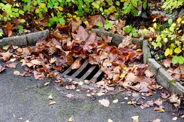 Kanaldeckel mit Herbstlaub