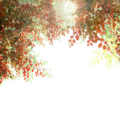 Beautiful autumn leaves frame with sun light isolated on white b