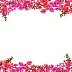 Tuinposter Azalea Bougainvillea flower frame on white background