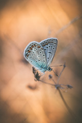 Small blue butterfly on grass