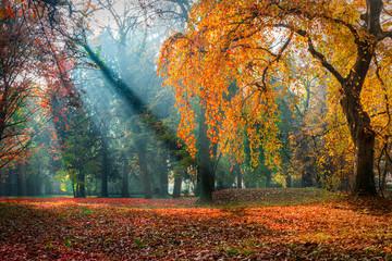 Misty autumn morning in the park