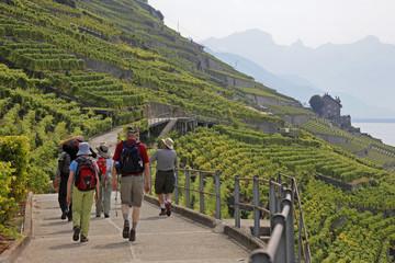 vineyards n hikers