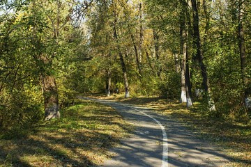 Autumn scene with road in forest and fallen leaves.