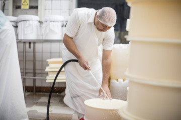 Cheese factory worker cleaning containers with hose Wall mural