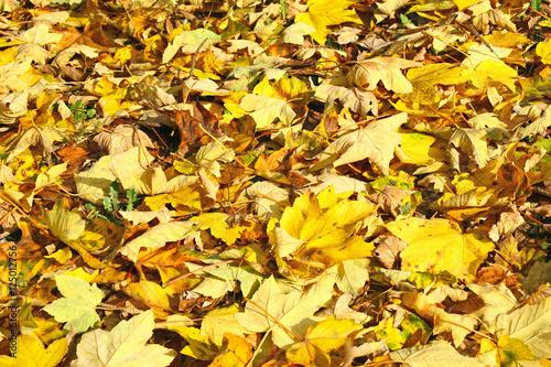 quot tapis de feuilles mortes quot stock photo and royalty free images on fotolia pic 125012756
