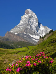 Swiss beauty, Matterhorn and flowers, Zermatt,Valais,Switzerland,Europe