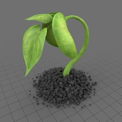Plant Sprout 2