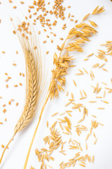 Spike of wheat and wheat grains. Ears of oats and oat grains