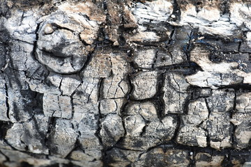 Black coal. Burnt tree. Macro. Front view.