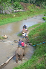 Group tourists to ride on an elephant in forest at Chiang mai, t