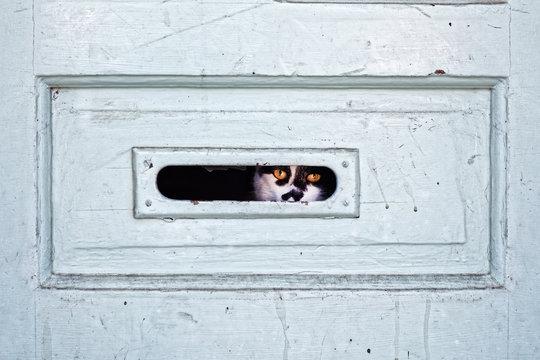 Mail Slot Watch Cat