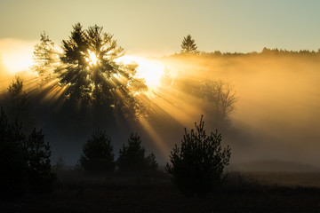 Sunrise, Rays, Trees and Mist - Mew Lake abandoned airfield, Algonquin Park, Ontario, Canada