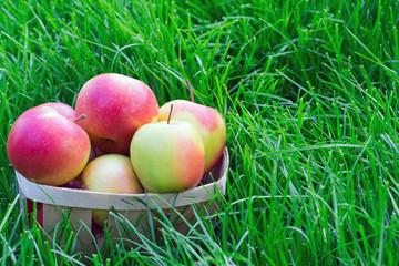 apples in a wicker basket in the grass
